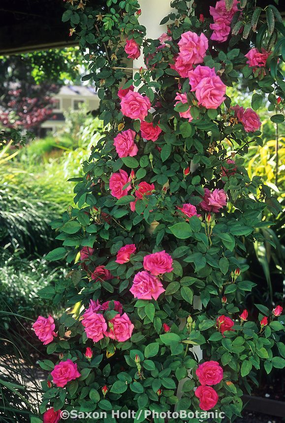 Love Garden Roses: 338 Best Images About In The GARDEN On Pinterest