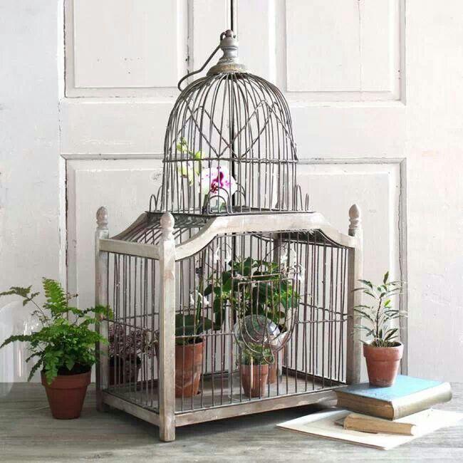 Les 74 meilleures images du tableau cages nichoirs sur for Oiseau domestique interieur