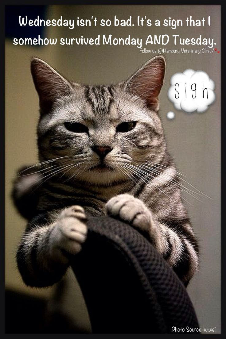 Wednesday humor | Animal funny | Cute cat | Not so bad ...