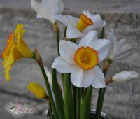 (1) Gallery.ru / Фото #6 - Нарциссы - decoflower