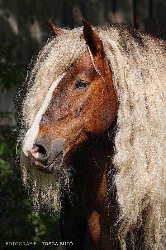 Horse / Tosca Suto