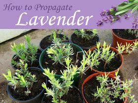 DIY: 10 Jolies plantes gratos pour la maison. UPcycling, Be greeN, Home sweet Home, How to, Déco Maison, jardinage, pot, plant, grow, seeds, planter, graines