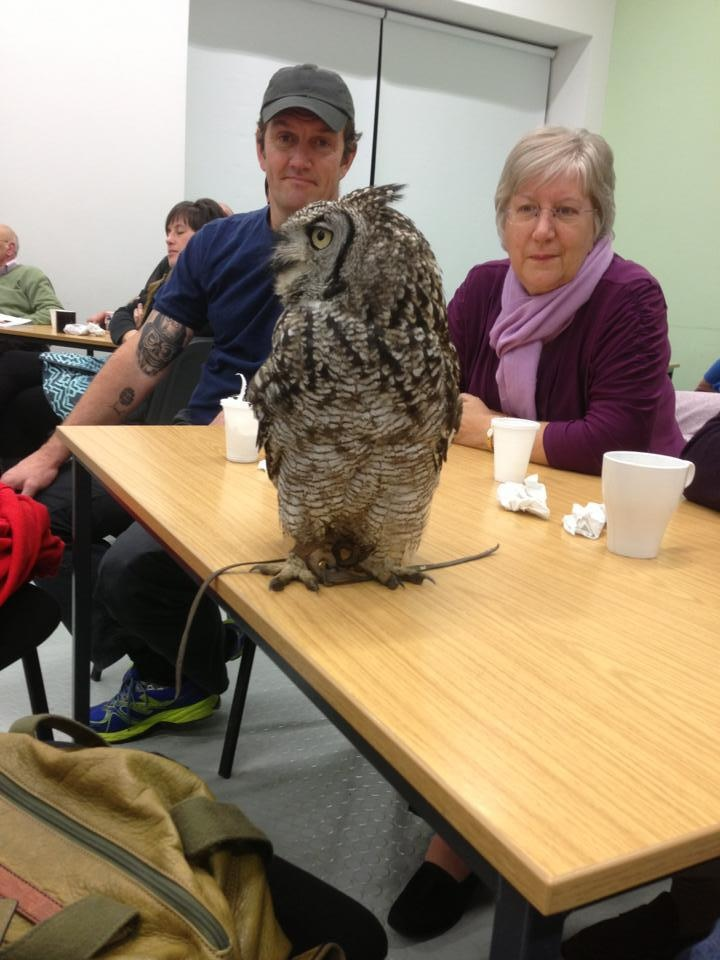 Ronnie the Indian Eagle Owl
