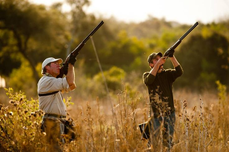 The Mourning Dove: Tips and Tactics to Improve your Dove Hunting Experience