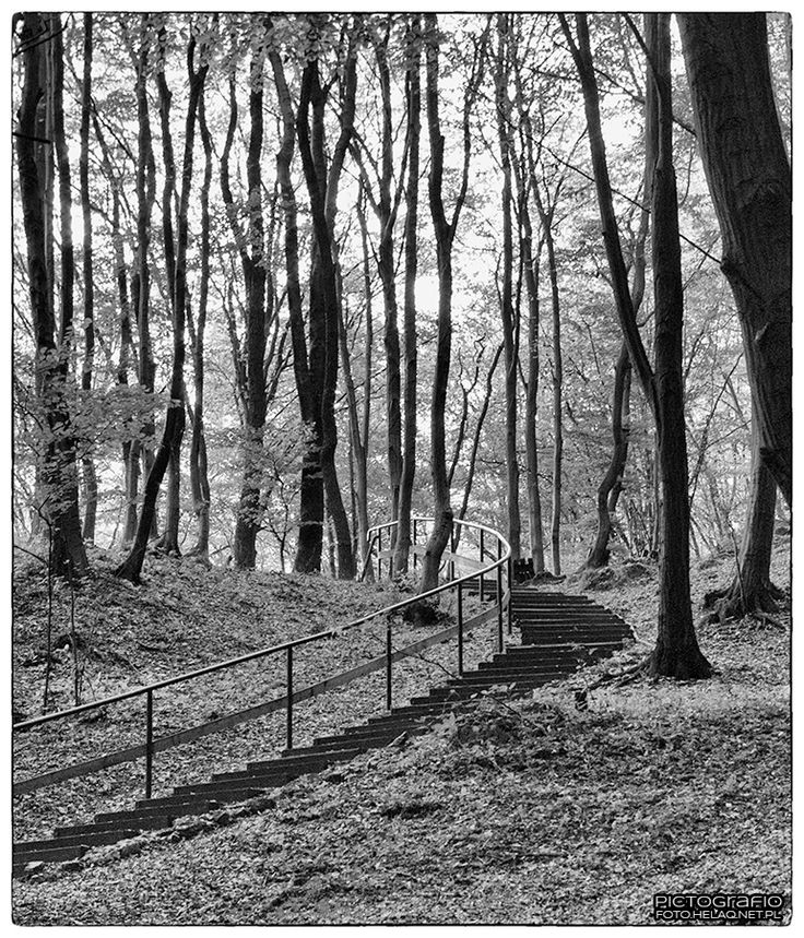 Pictografio: Stairs to the forest