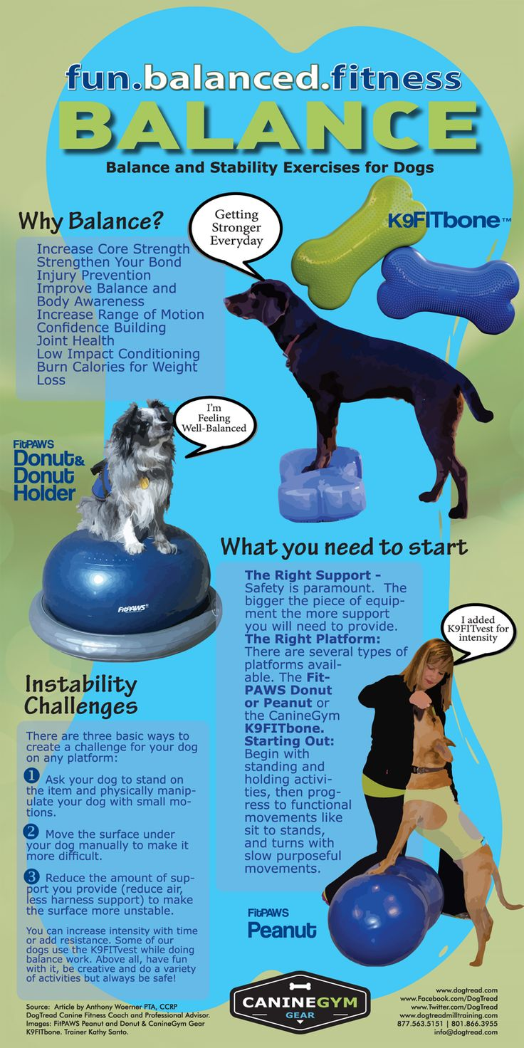 Balance and Core Exercises for your Dog with the K9FITbone by Canine Gym Gear and DogTread