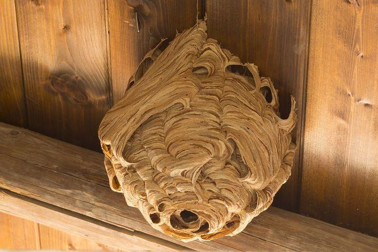 die besten 25 wespennest ideen auf pinterest keramik international insekten und insekten. Black Bedroom Furniture Sets. Home Design Ideas