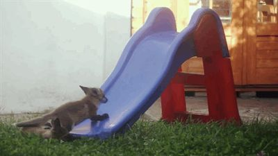 "You have an almost uncontrollable urge to shout ""YOU CAN DO IT, LITTLE GUY!"" at this baby fox trying to climb up a slide. 