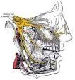 Injury of trigeminal nerve : KMLE 의학 검색 엔진 - 의학사전, 의학용어, 의학약어, 의학논문, 약품/의약품 검색