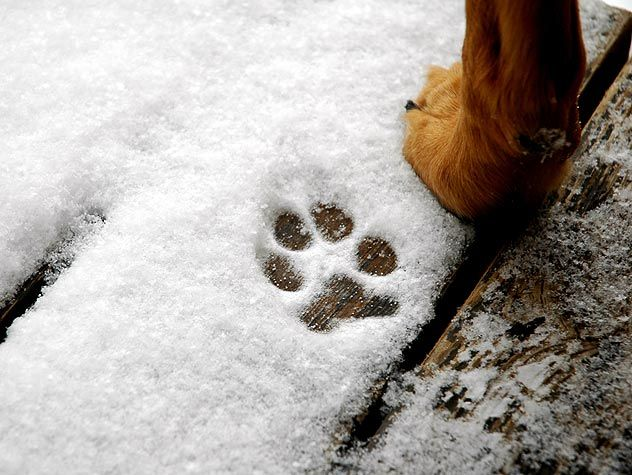 Falling temperatures are no excuse to avoid outdoor exercise with your dog. Find out how to exercise your dog during the cold weather months here.