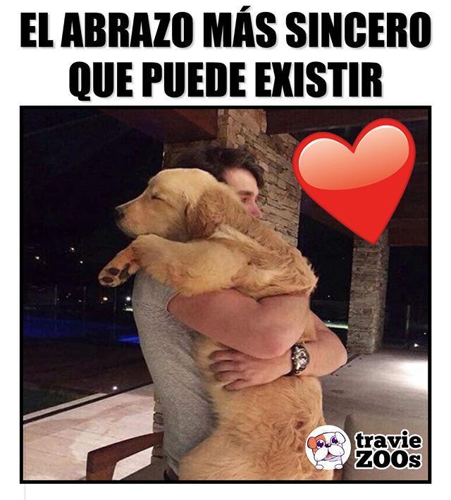 Amor Verdadero Amor De Cachorros Perros Frases Amor De Perro