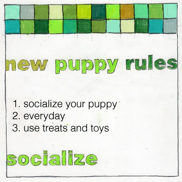 newpuppyrules_socialize