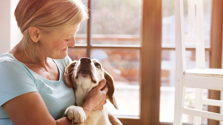 What is a pet trust