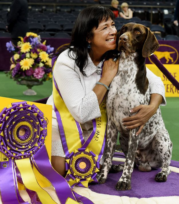 German Shorthaired Pointer CJ Wins Best In Show At America's Most Prestigious Dog Show
