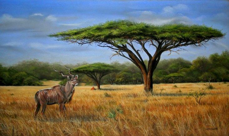 Kudu Scene