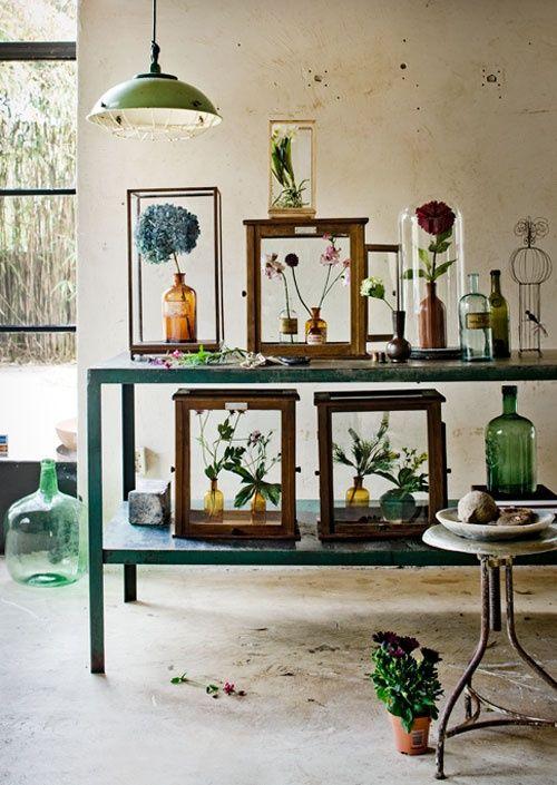 The Indoor Gardener . . .love the green bottles