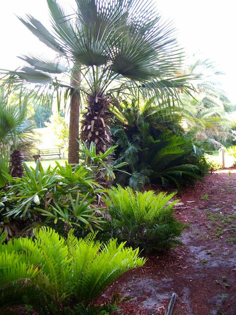 40 best Florida Botanical Gardens images on Pinterest | Florida ...