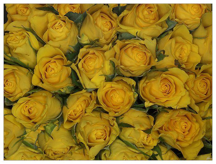 Gyönyörű rózsák szép hölgyek!. Vita LiveInternet - orosz Service Online Diaries