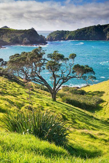 Tutukaka, The North Island, New Zealand
