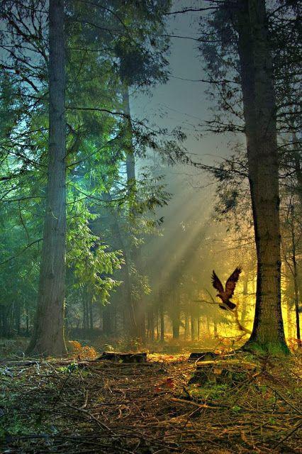 Stunning Views: Forest
