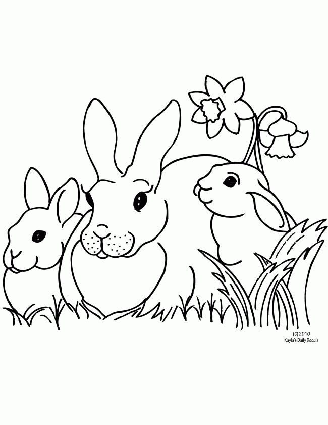 adult coloring pages rabbit bunnyrabbitdaffodil CP