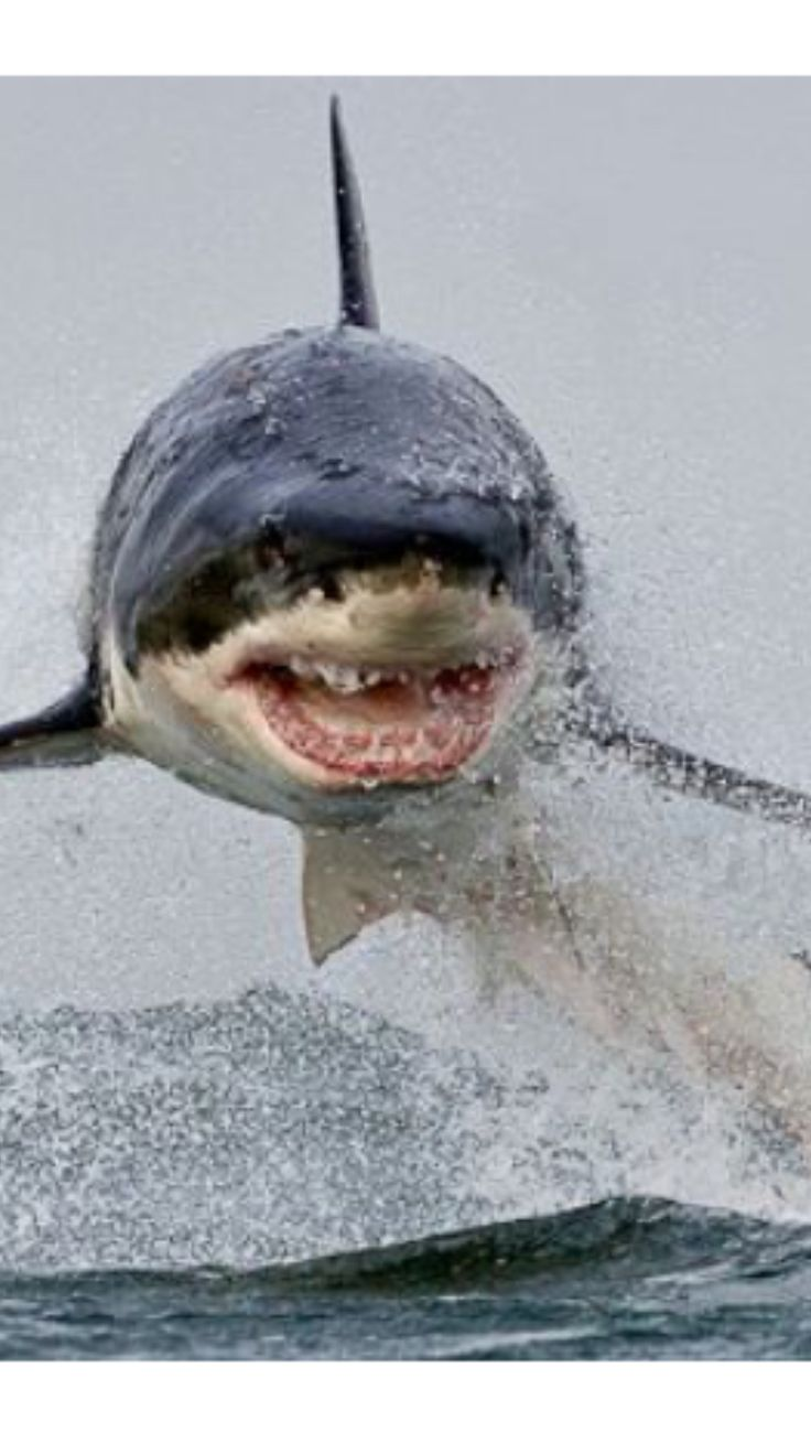 This really makes me NEVER wanna get in the ocean EVER AGAIN!!!  Great White