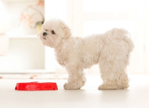 The Best Food Options for Your Dog with Allergies | petMD