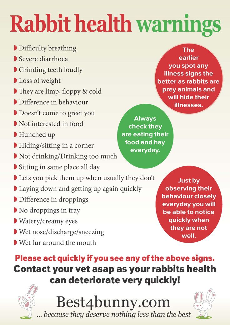 Looking out for warning signs is so important for your bunnies health.