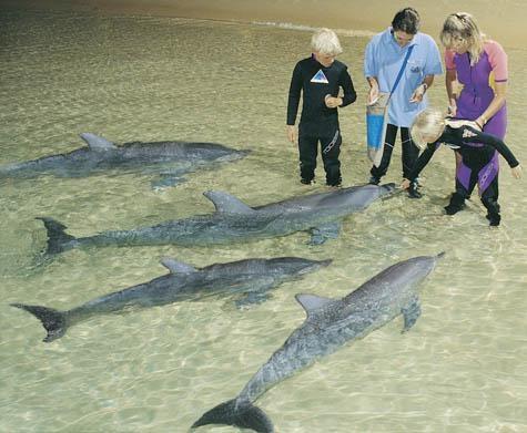 Feeding the dolphins at Moreton Island