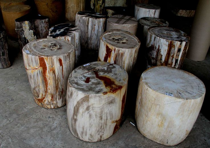 Natural Petrified Tree Stump Side Tables made from genuine fossil wood.
