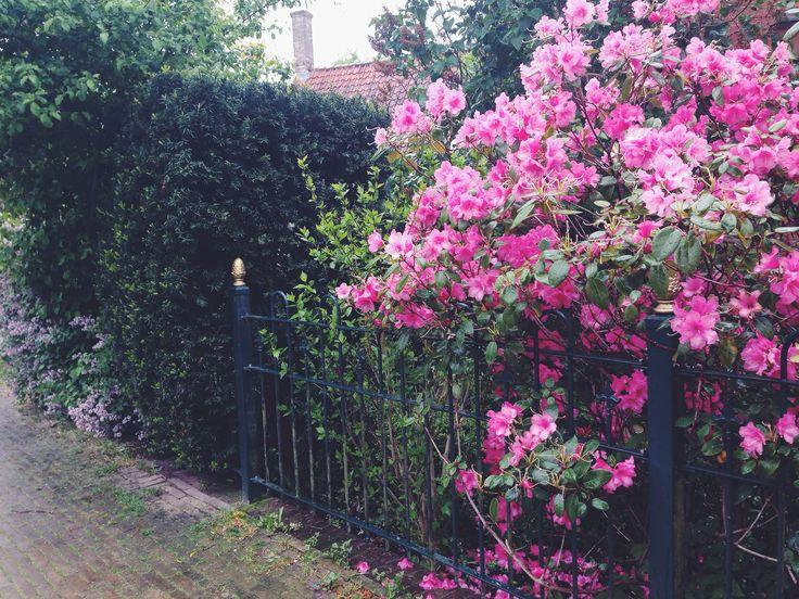 Flowers. Street.