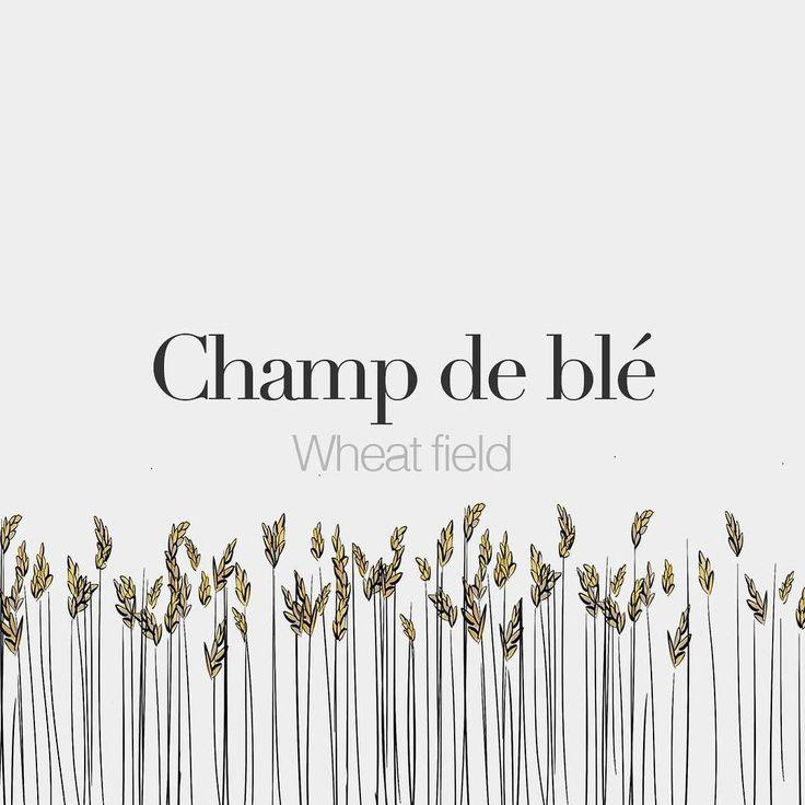 Champ de blé (masculine word) | Wheat field | /ʃɑ də ble/