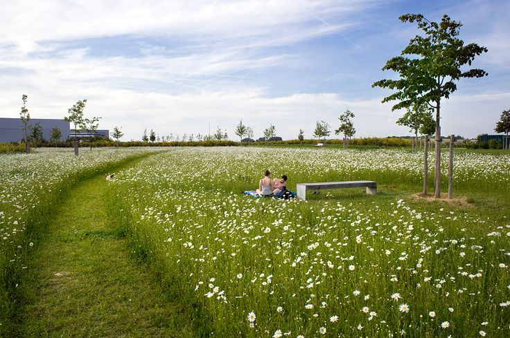 Located on former agricultural land and in front of buildings, the park serves as backbone for the new district of Montévrain. Its environme...