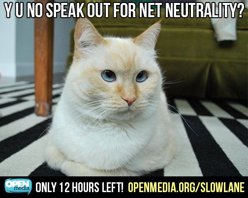 Cuddles the cat wants you to speak out against the Internet slow lane, right meow. Go to https://OpenMedia.org/SlowLane in the next 12 hours!