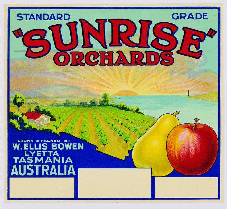 Sunrise orchards Brand label, Lyetta, Tasmania, c. 1930