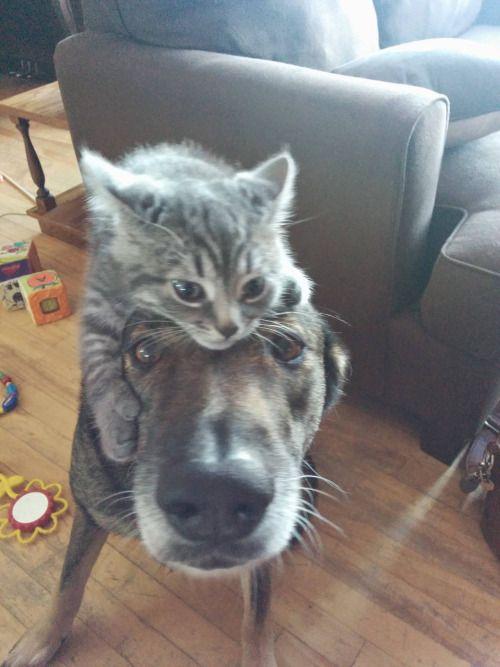Hund PAul u. Katze Pschel (mit Bildern) Süße tiere