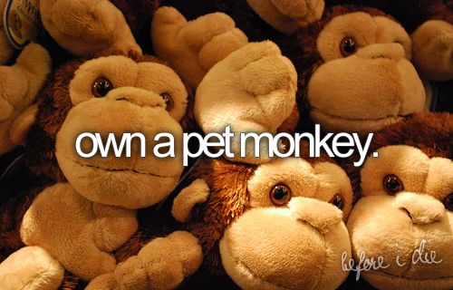 own a pet monkey.