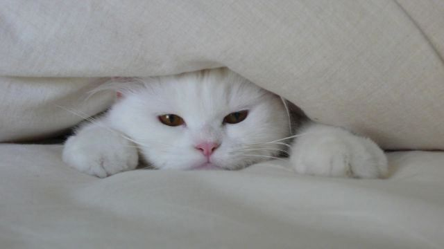 ねこ 猫 動物 かわいい 壁紙 待ち受け 高画質 | 完全無料画像検索のプリ画像!