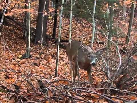 How to Determine Treestand Placement [VIDEO] | Griffin's Guide to Hunting and Fishing
