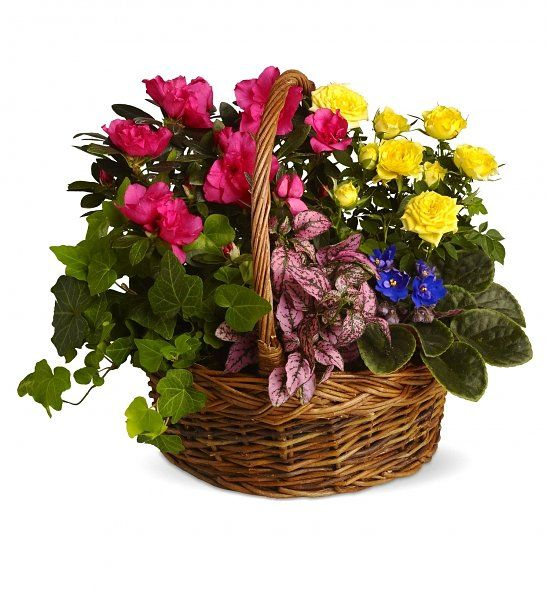 Blooming Garden Basket: Plants - Bright, live plants to send strength & serenity.