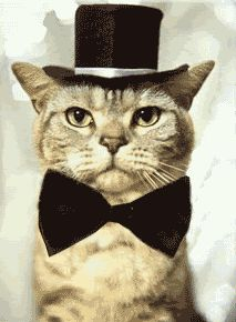 Cats In Bowties And Top Hats