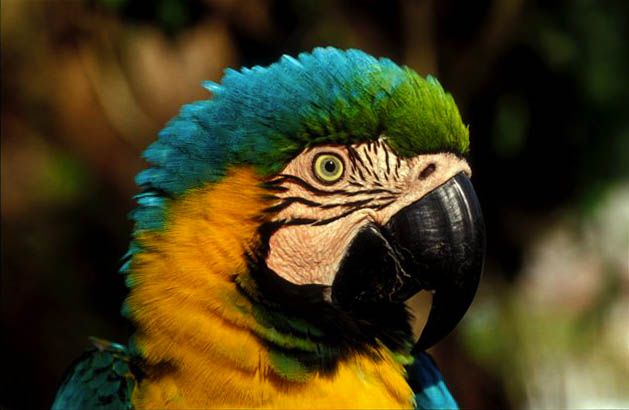 Rainforest carnaval pinterest - Amazon rainforest animals wallpaper ...