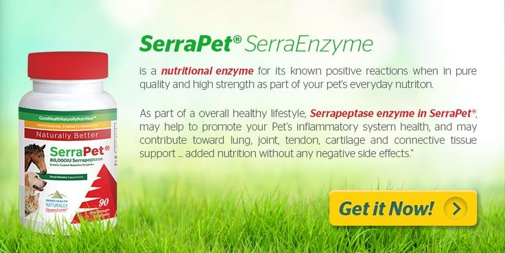 #Serrapet For Animal Health Support Including #Dogs, #Cats & #Horses. Powerful Anti-Inflammatory Action. Buy 3 and get 1 free! Free shipping over $55(USA) $50 (Canada) AU$69 (Australia) 🐶😺🐎 🐕🐩😻🐴 #serrapeptase