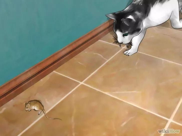 Изображение с названием Get Rid of Mice Naturally Step 13