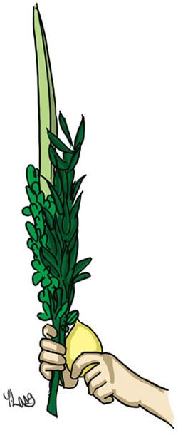 The Four Kinds: The Lulav and Etrog - Expressing Our Unity - Sukkot & Simchat Torah