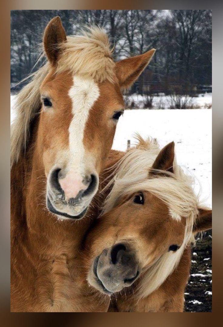 Картинки с веселыми лошадками