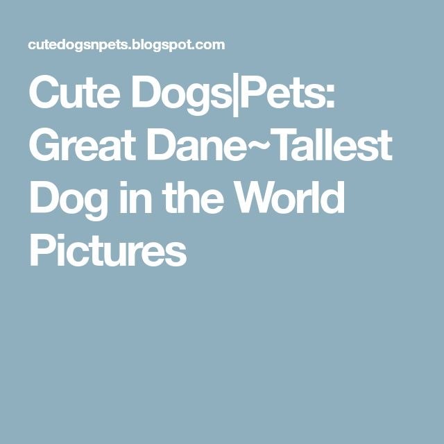 Cute Dogs|Pets: Great Dane~Tallest Dog in the World Pictures