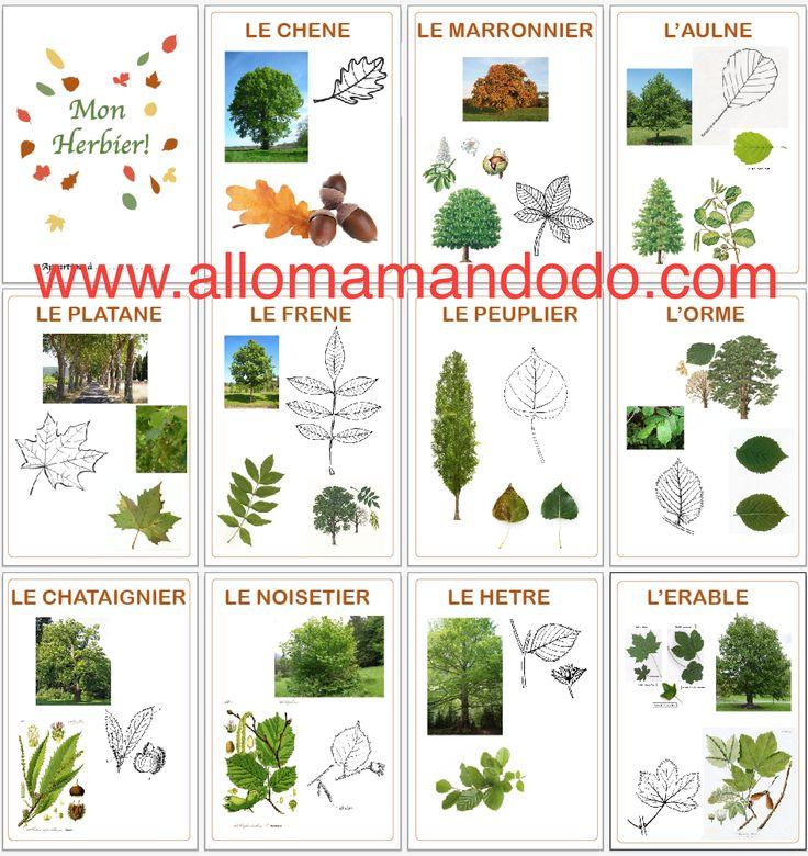 Célèbre Les 25 meilleures idées de la catégorie Reconnaitre les arbres sur  YK32