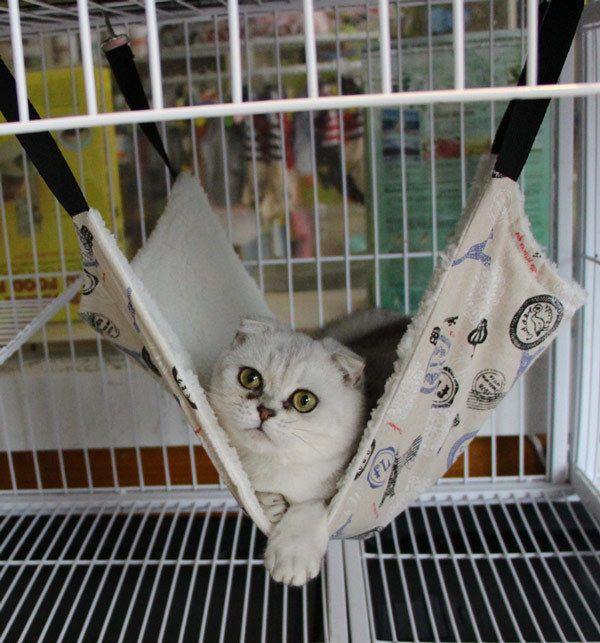 Best 25 cat hammock ideas on pinterest cat things cat stuff and diy cat toys - Cat hammock scratcher ...