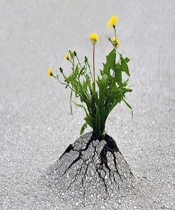 Dean WEST Superbes clichés sur la survie des plantes en milieux hostiles